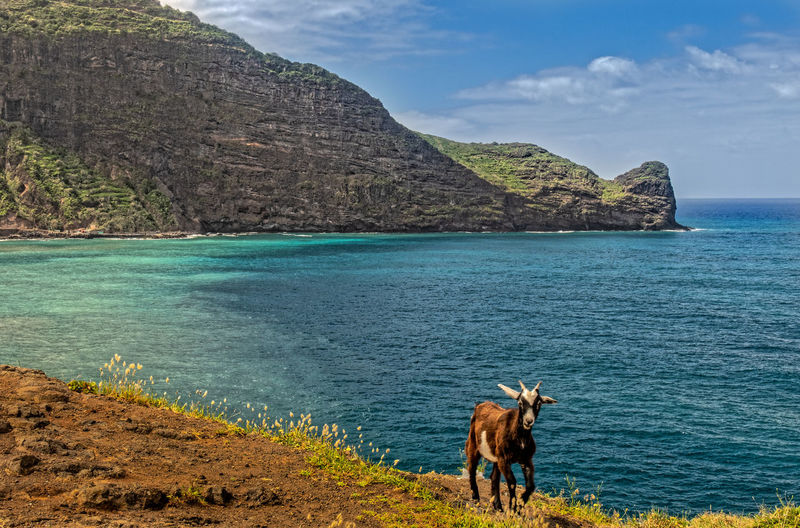 View of horse on sea shore