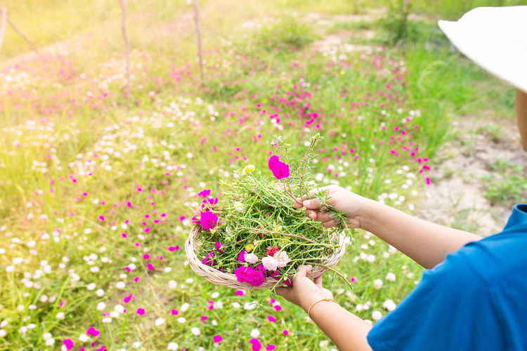 Hand holding fresh pink flowers in field