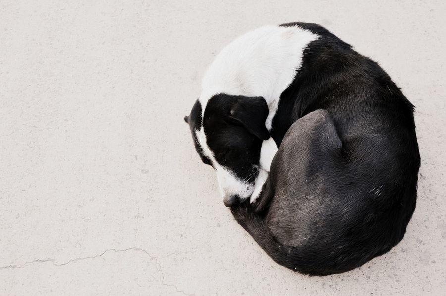 dog Animal Themes Black And White Black And White Dog Cold Days Dog Mammal Round Shape Sleeping Dog
