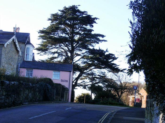 Taking Photos TreePorn Trees Landscape
