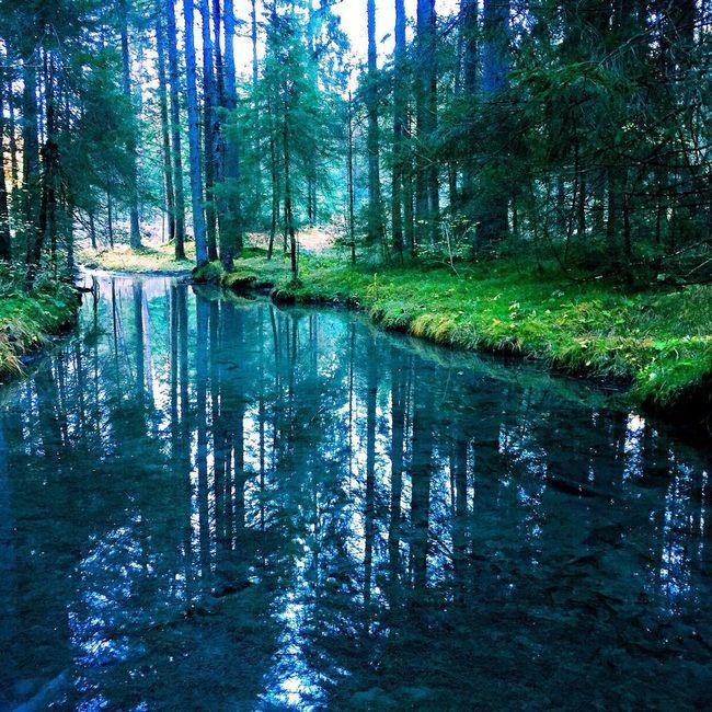 🌞🌞🐟🦂🐞🐛🌳🌴🍀🌴☘🌲🌱🌿🌴🌳 Nature Landscape Woods Hello World