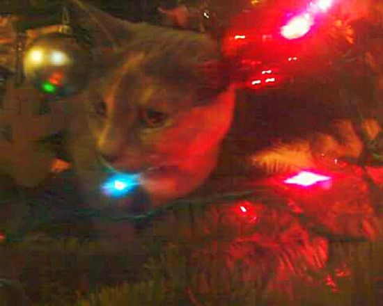 Christmas Lights Kittycat Cat In A Tree I Like My Own Pictures!✌😎