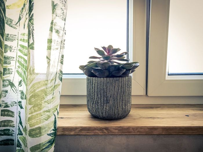 Plant Indoors