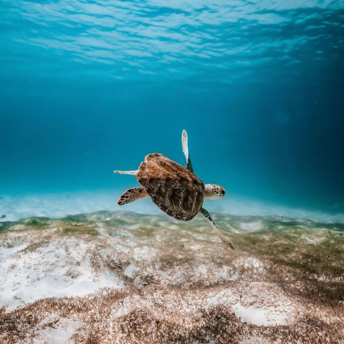 View of a tortoise swimming in sea