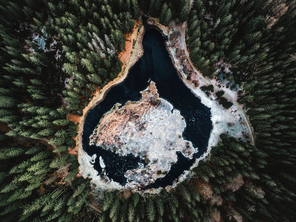 Drone  Beauty In Nature Black Forest Close-up Day Lake Nature No People Outdoors Tree