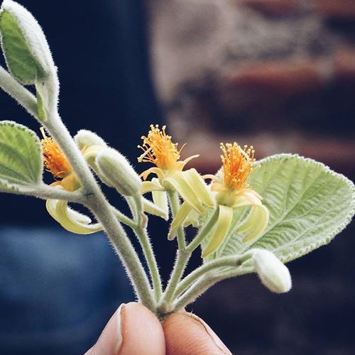 Every flower is a Soul blossoming in the Nature .🌼🌸 ...................................................................................... Vscocam Vscobest vscoindia vscogood IndiaPictures india flowerpetals
