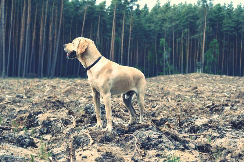This Is My Life❤ My Street Dog Nice Hybrid Dog Brandenburg Wood Jagd Jagdmodus Golden Retriever Mix http://american-gointer.com/index.html American Gointer