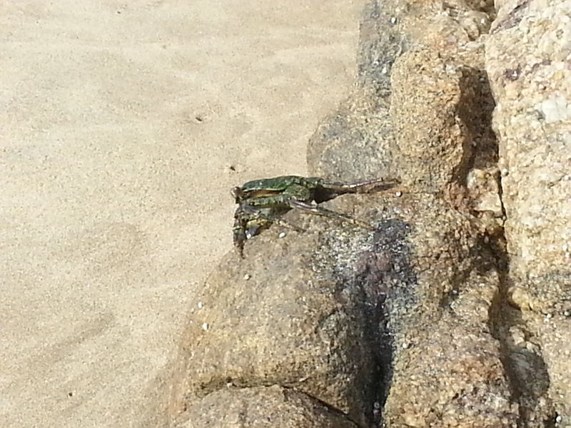 Walking on the beach yesterday. Taking Photos Check This Out Rocks Sea Rocks Crab Sea Crab South Africa Sea_collection