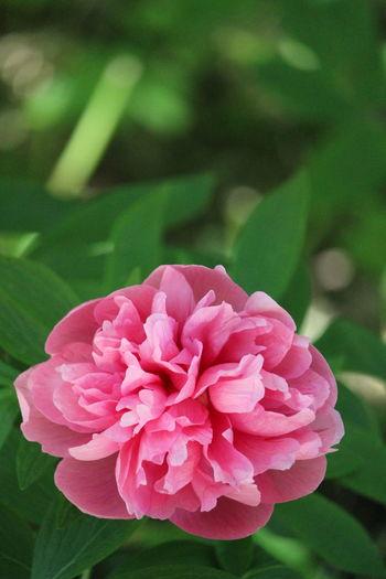 Flower Pink Color Botanical Gardens