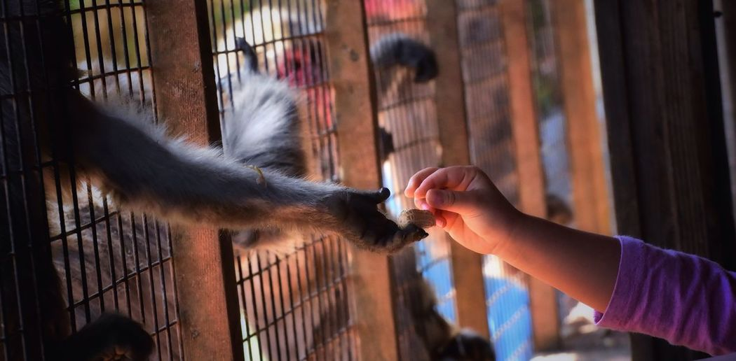 Close-Up Of Kid Giving Peanut To Monkey In Cage At Zoo