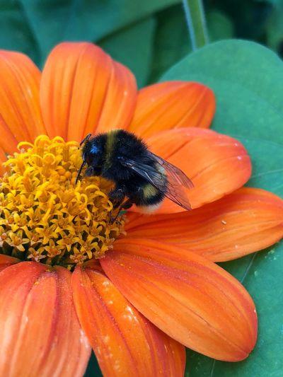 Bourdon Flowering Plant Freshness Animal Close-up Petal One Animal