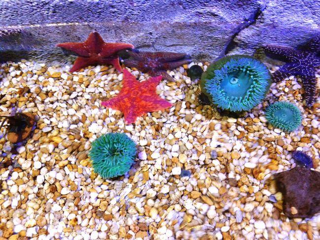 Starfish  Aquarium