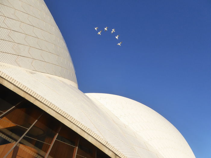 Architecture Blue Clear Sky Detail Sydney Opera HHouse Under Flock Of Sea Gulls Sea Gulls Flyying Over Sydney Opera House