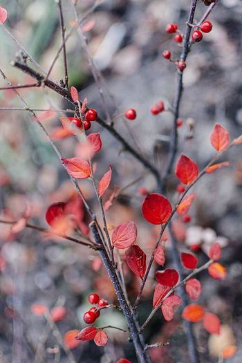 Red Growth Tree