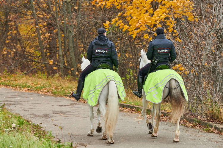 Rear view of men riding horse in forest