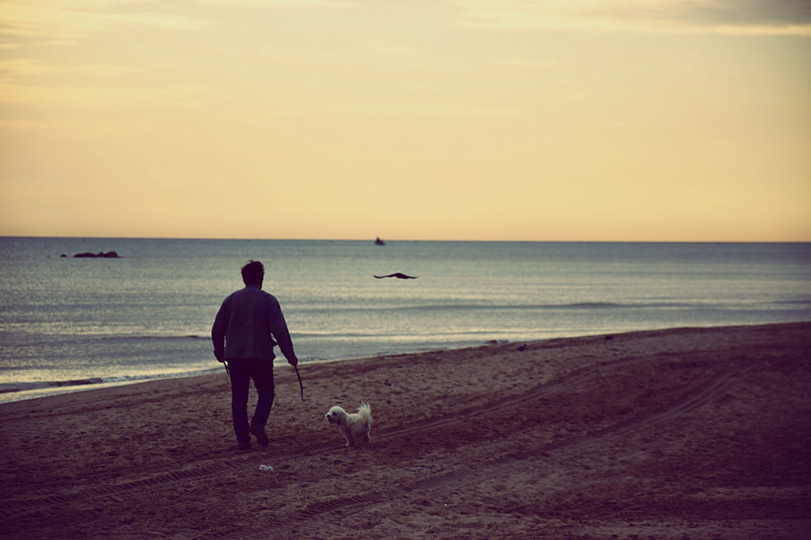 sea, horizon over water, beach, water, shore, men, lifestyles, full length, sand, scenics, leisure activity, rear view, tranquil scene, beauty in nature, tranquility, clear sky, nature, copy space, sky