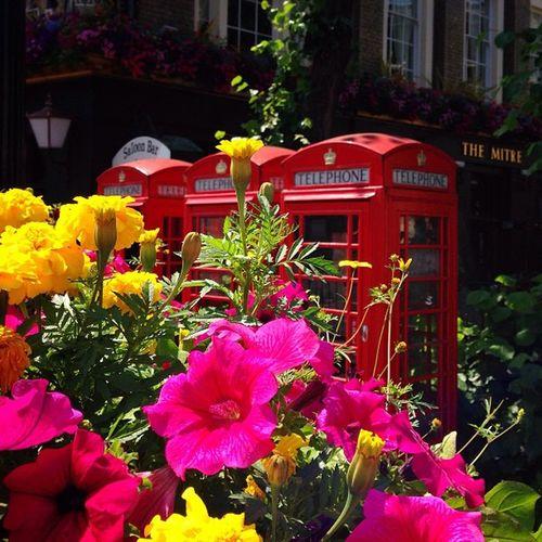 Blooming Red Telephone's ☀️☀️???☀️☀️??☎️ #greenwich #lom_lhe #alan_in_london #gf_uk #gang_family #igers_london #insta_london #london_only #thisislondon #ic_cities #ic_cities_london #ig_england #love_london #gi_uk #ig_london #londonpop #allshots_ #aauk Alan_in_london Insta_london Phoneboot Thisislondon Red Gi_uk Greenwich Igers_london Telephone Kyrenian DeluxeFX Ig_england Love_london Gang_family Ic_cities_london Londonpop Ig_london Dotz Aauk Allshots_ London_only Loveyoursummer Ic_cities Yourturnbritain Gf_uk Lom_lhe