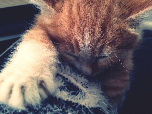 My Cat EyeEm Nature Lover Hi! Jasurphoto Stylfm Love ♥ Lovely Lovelovelove