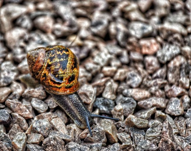 Close-Up Of Snail On Gravel