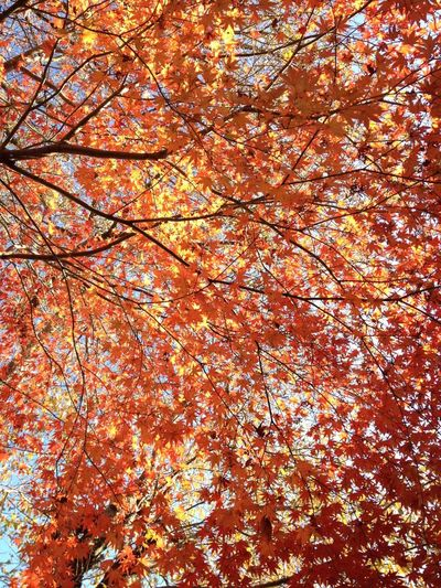 Nature Orange Color Full Frame Autumn🍁🍁🍁 Beauty In Nature