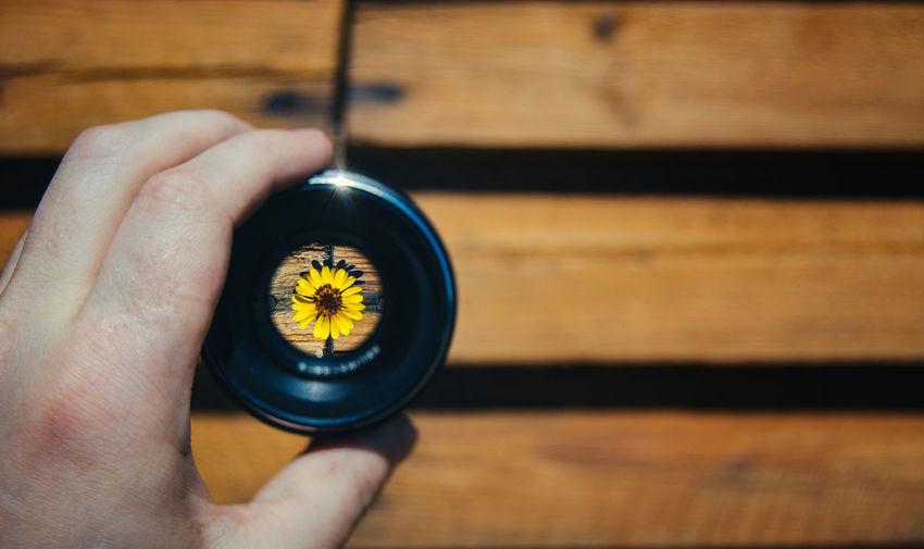 Sunflower seen through camera lens
