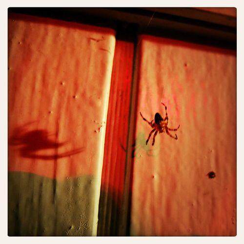 spiders night Spider