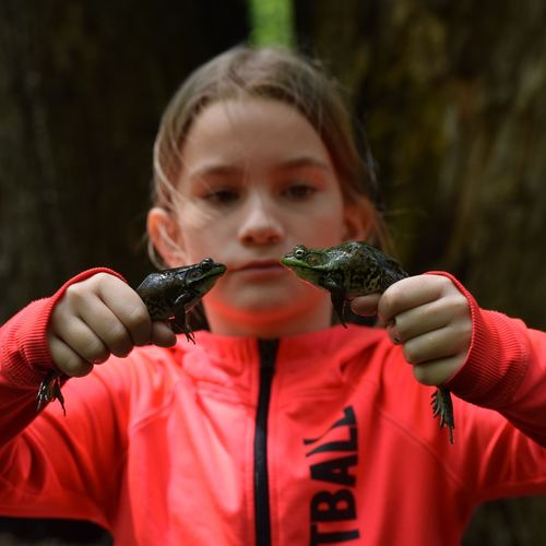 Close-up of girl holding two frogs