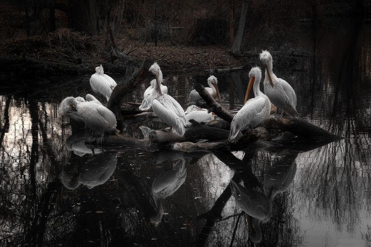 Birds perching on wood in lake