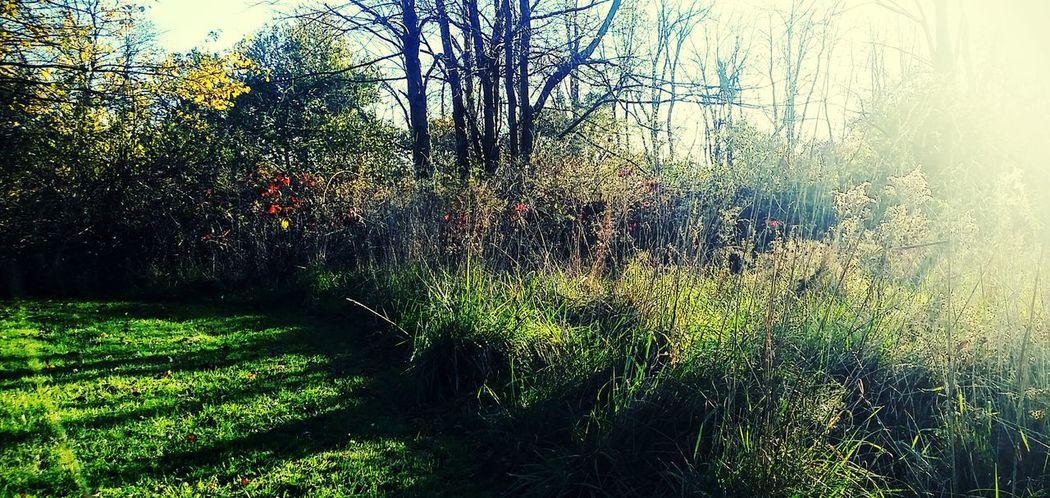 Scenics Under Blue Skies Autumn Beauty In Nature
