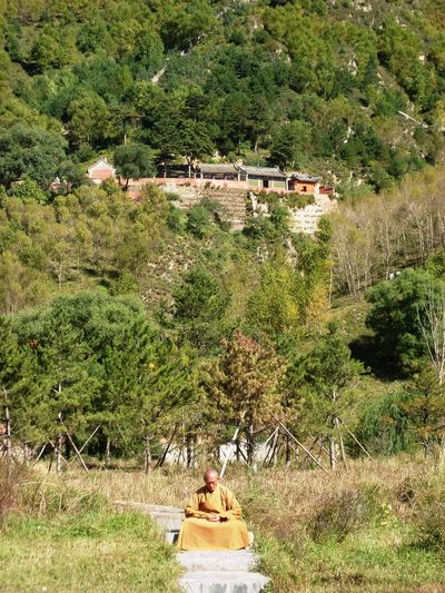 Wutaishan Monastery, Shanxi Architecture Beauty In Nature Buddhist Monk Buddhist Temple Building Exterior Day Grass Growth Meditating Meditating Monk Nature Outdoors Tree