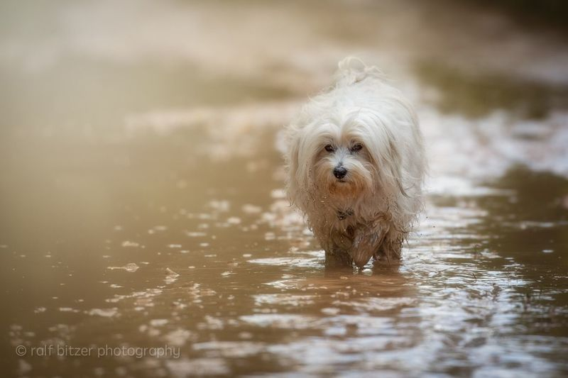 Dog Pets Animal Themes One Animal Mammal Domestic Animals Portrait Looking At Camera Water No People Day Nature Outdoors Close-up