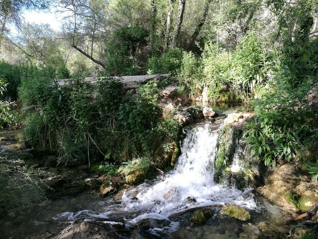 Water Nature No People Outdoors Forest Tranquility Beauty In Nature Life Vida Agua Primavera Springtime Nature Beautiful Day Spring Nacimiento Beauty In Nature Rural Scene Landscape Tranquility Fuente❤Agua