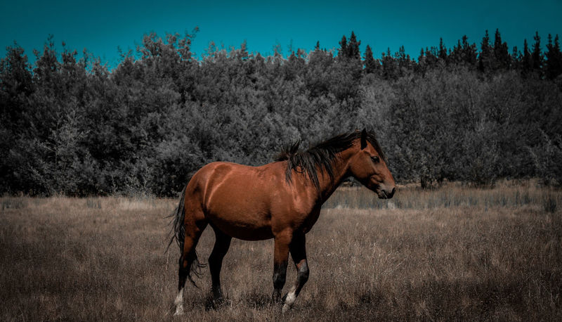 Undomesticated Desaturated Outdoor Photography Tree Agriculture Horse Sky Field Growing