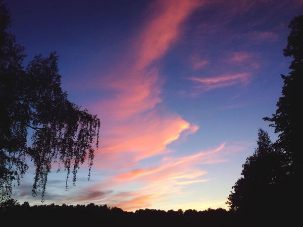 Tree Beauty In Nature Sky Nature Silhouette Sunset Scenics No People Tranquility Tranquil Scene Outdoors Cloud - Sky Low Angle View Growth Forest Day