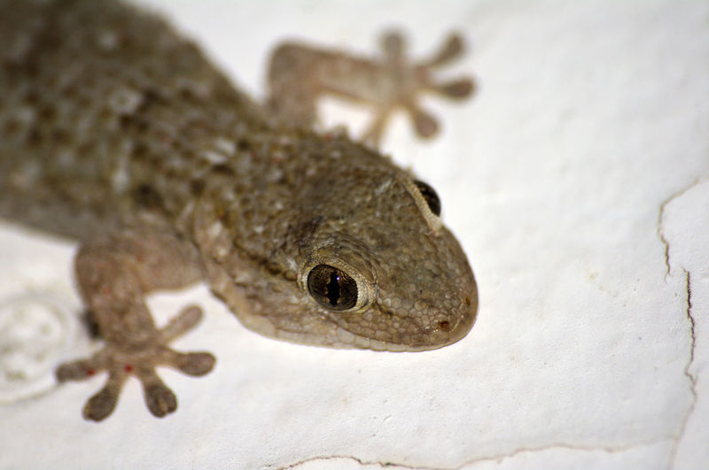 Close-up of lizard on white wall