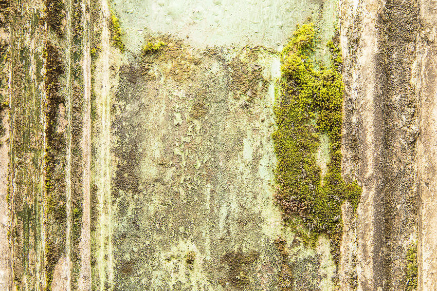 Old Cement Wall Seed Walls Of Cement Are Moss Up Abstract Backgrounds Cement Close-up Concrete Day Deterioration Growth Moss Nature Old Outdoors Plant Plant, Seed, Implant, Form Textured  Tree Wall - Building Feature