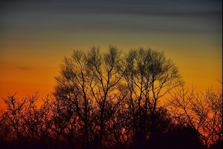 Sunset Silhouette Tree Nature Dramatic Sky Dusk Beauty In Nature Dark Plant Landscape Outdoors Sky Rural Scene Beauty Growth Branch Scenics Sunlight No People Day Shades Of Winter