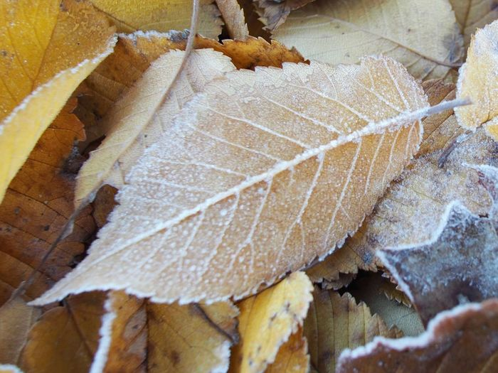 Beauty In Nature Close-up Cold Temperature Day High Angle View Leaf Leaves Nature No People Outdoors