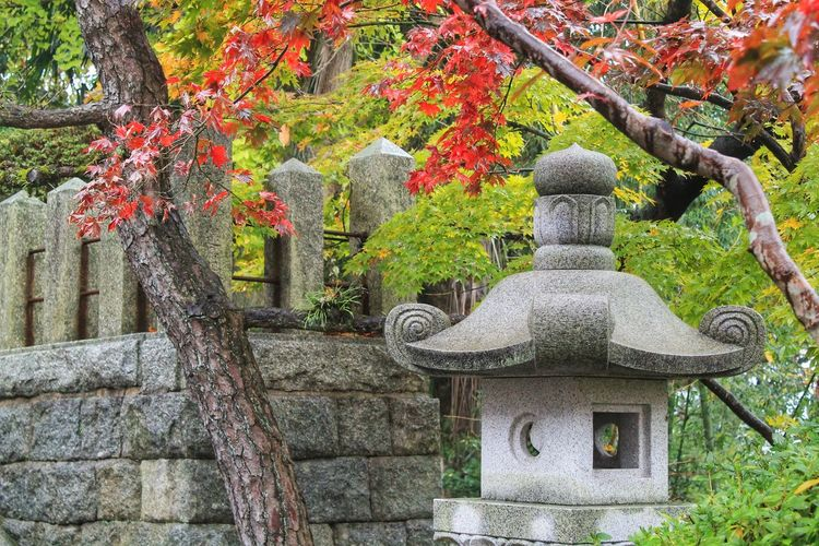 ASIA Beauty In Nature Branch Buddhism Day Formal Garden Garden Green Color Growth Japan Japanesemaple Nature Place Of Worship Plant Rainy Day Red Color Religion Shintoism Shrine Spirituality Stone Lantern Stone Material Temple Tree Tree