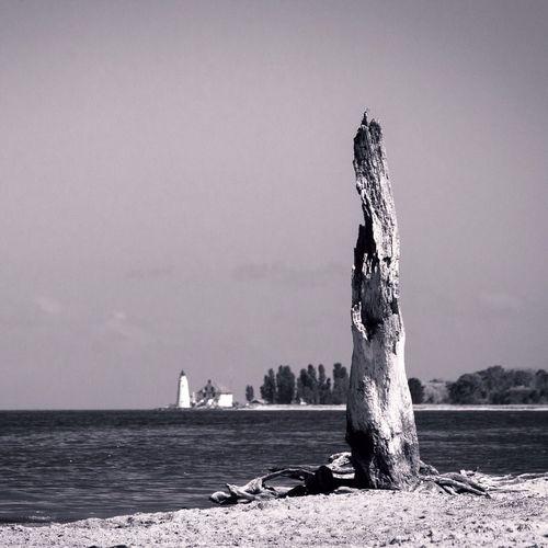 Tree Trunk At Beach Against Sky