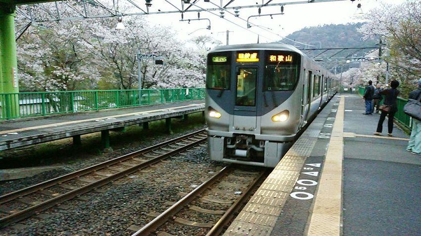 2015-4-4 Hello World Hanami Charry Sakura Trees Flowers Railway Station Public Transportation Trains Japan Photography Osaka Japan Ultimate Japan