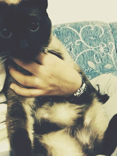 Mycat Kızım Cat Mylove