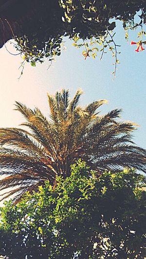 Tinos Greece Iland Trees Sky Green Blue