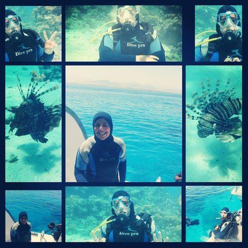 at Sharm Elshiekh Diving DivingSuit Sea Underwater lionFish ? ??? ????