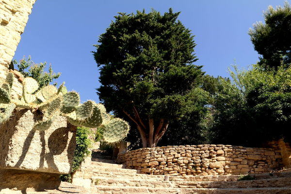Blue Sky Cactus Chateauneufdupape Colors Culture France Old Buildings Outdoors Provence Ruin Stone Wall Tree