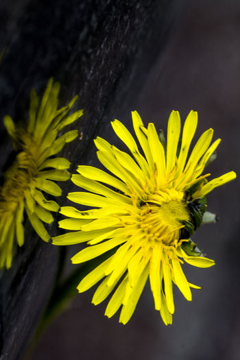 Beauty In Nature Blooming Blossom Botany Close-up Flower Flower Head Flowers Flowers,Plants & Garden Focus On Foreground Fragility Freshness In Bloom Macro Macro Photography Mirror Mirror Reflection Mirrored Nature No People Outdoors Petal Plant Pollen Yellow