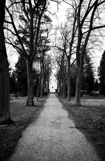 Tree Direction The Way Forward Plant Nature Footpath Diminishing Perspective No People Day Architecture Tranquility Park Land Built Structure Growth Outdoors Building Exterior Trunk Tree Trunk vanishing point Treelined
