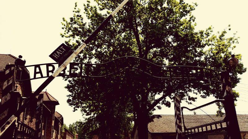Taking Photos Poland Auschwitz  War History Humanity...  Desperation Death