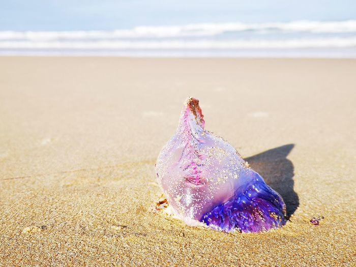 Sea Life Water Sea Beach Sand Wave Close-up Sky Horizon Over Water Jellyfish