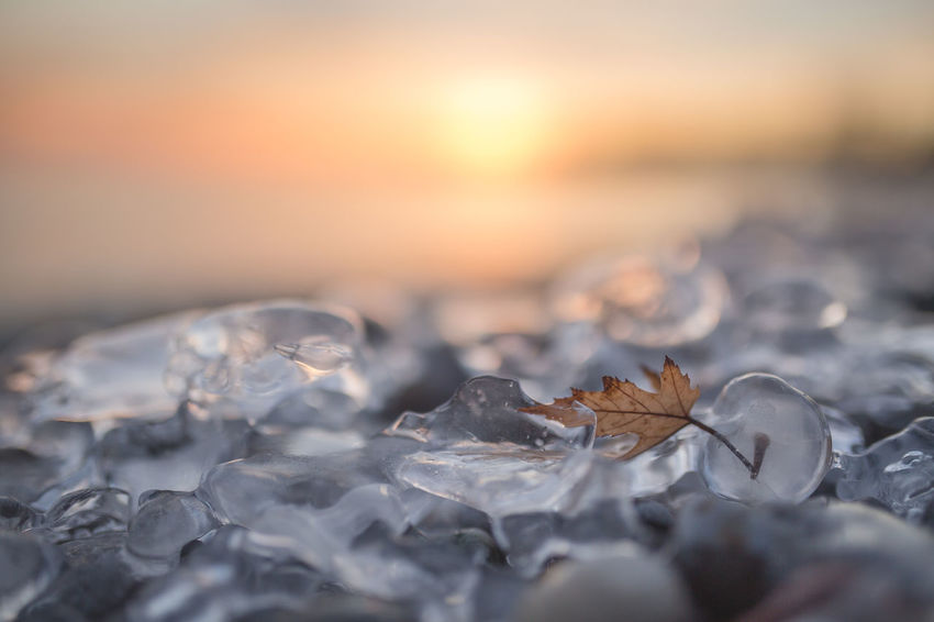 captive Winter Ice Cold Temperature Canada Lakeshore Lake Cold Leaf Frozen Sunset Sunset Sea Close-up No People Beach Nature Tranquility Day Outdoors Beauty In Nature Water Sky